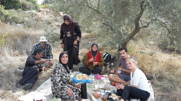 Olive Harvest 4