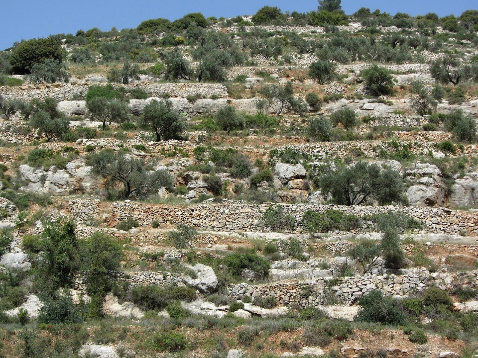 The Environment of Palestine